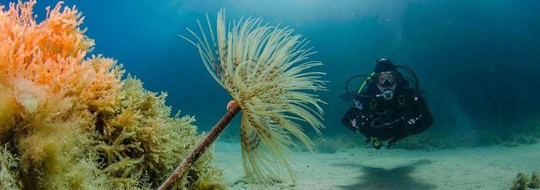 Southampton Scuba Diving