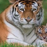 Zoo and wildlife parks